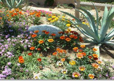 Desert-Scape-llc-gardens-5