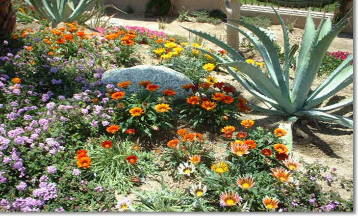 arizona landscaping plants and flowers flowers healthy
