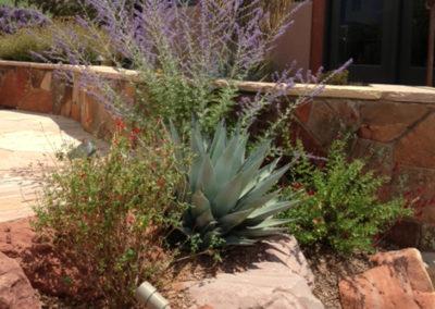 Desert-Scape-llc-gardens-7