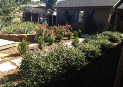Desert-Scape-llc-gardens-8