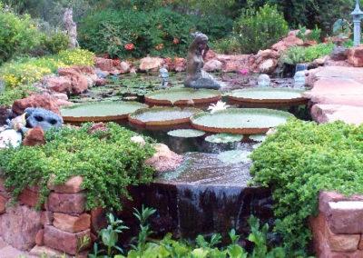 sedona-lily-pond